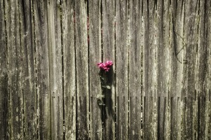 fence-615394_960_720