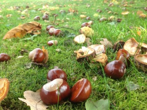 chestnuts-327699_960_720